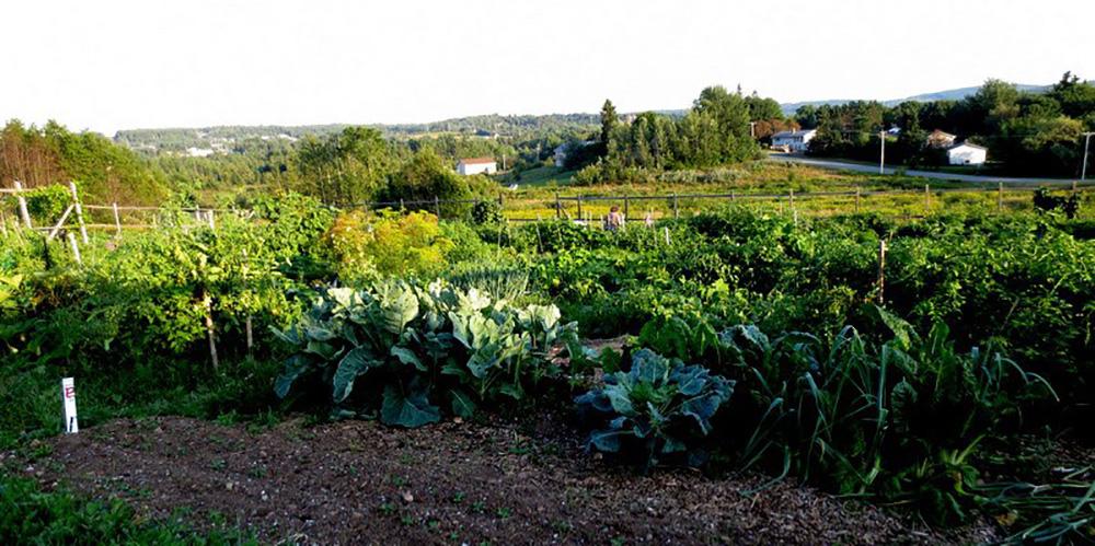 The Hampton Community Garden